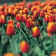 Flower2005